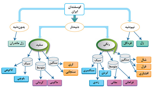sheep-breeds-in-iran1